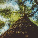 Novos desafios da educação ambiental