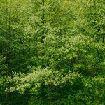 Minas Gerais adere ao Sinaflor, plataforma para controle de empreendimentos florestais